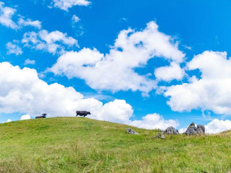 四国カルスト五段高原 青空と牛